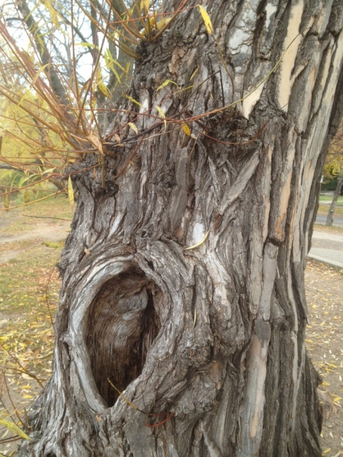Found this tree on a walk by Lake Harriet